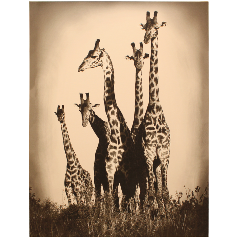 Amazing Giraffes Leftbank Art Ideas