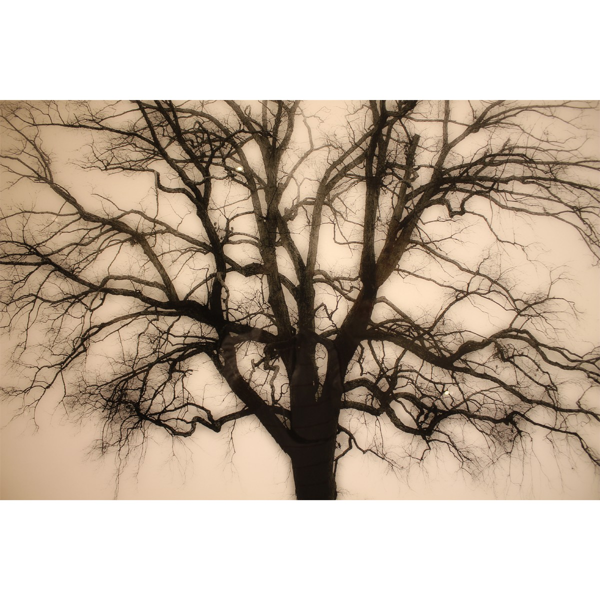 Vintage tree leftbank art wall decor