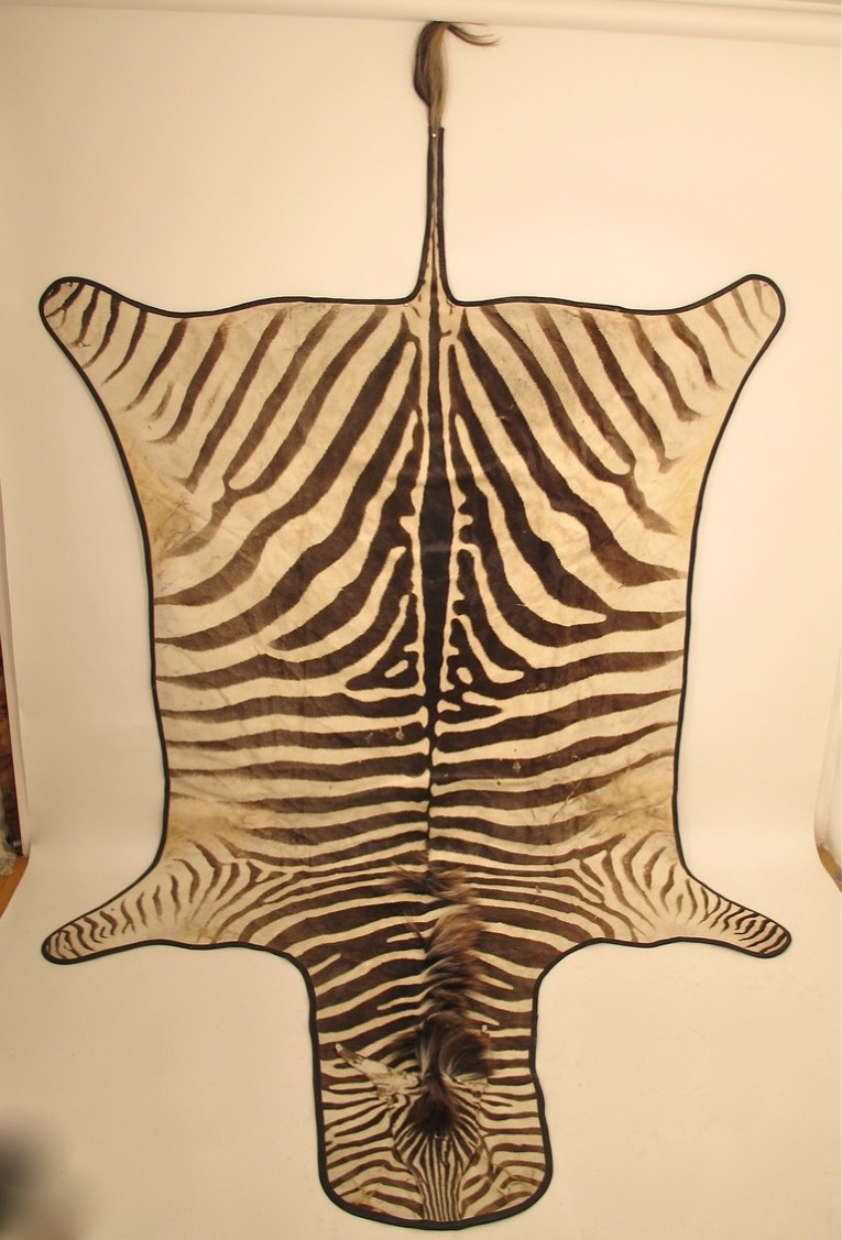 Charming Zebra Skin Rug With Skin Rug Also Rug Animal Print Rug For Living Room Rug Ideas