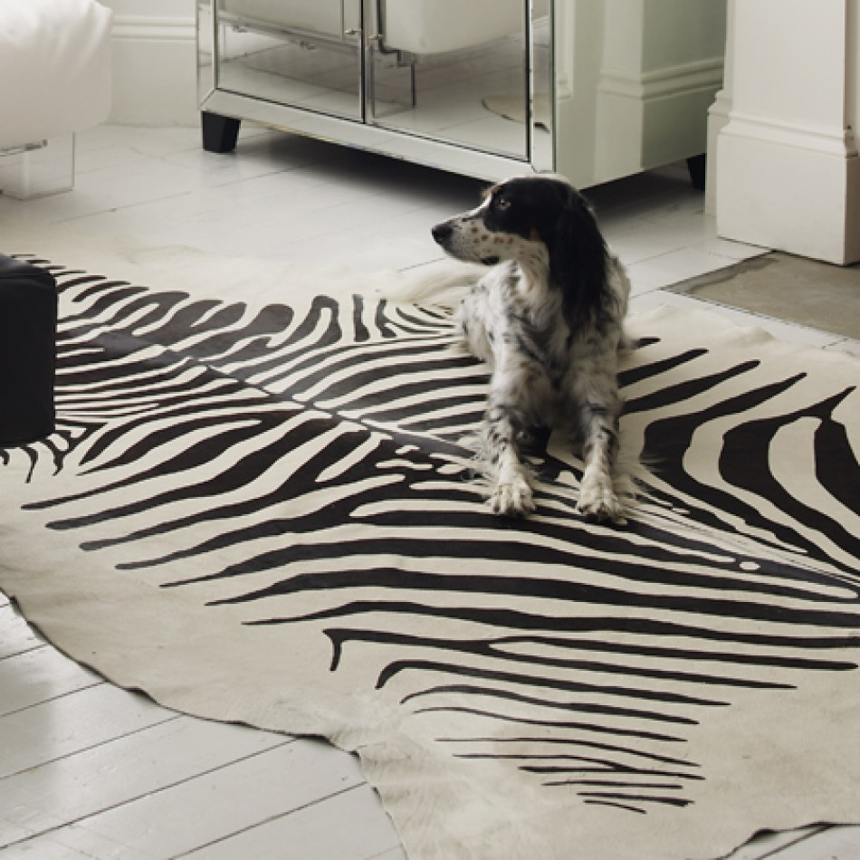 Flooring: Elegant Floor Using Zebra Skin Rug Amazon Ideas