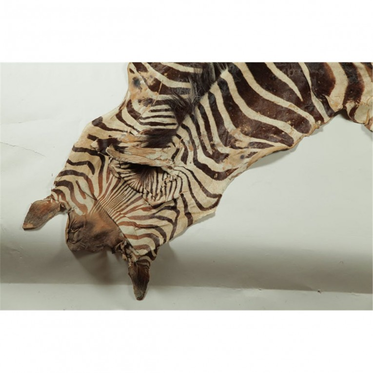 Classy Zebra Skin Rug With Skin Rug Also Rug Animal Print Rug For Living Room Rug Ideas