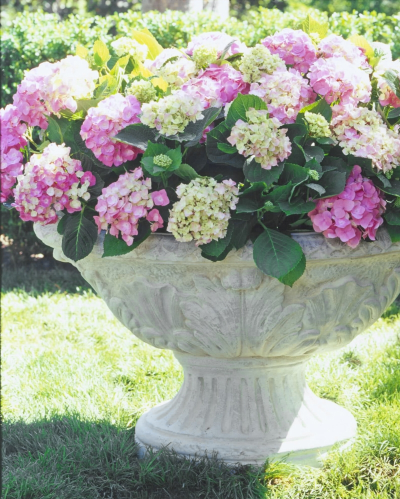 Unique urn planters white color for exterior