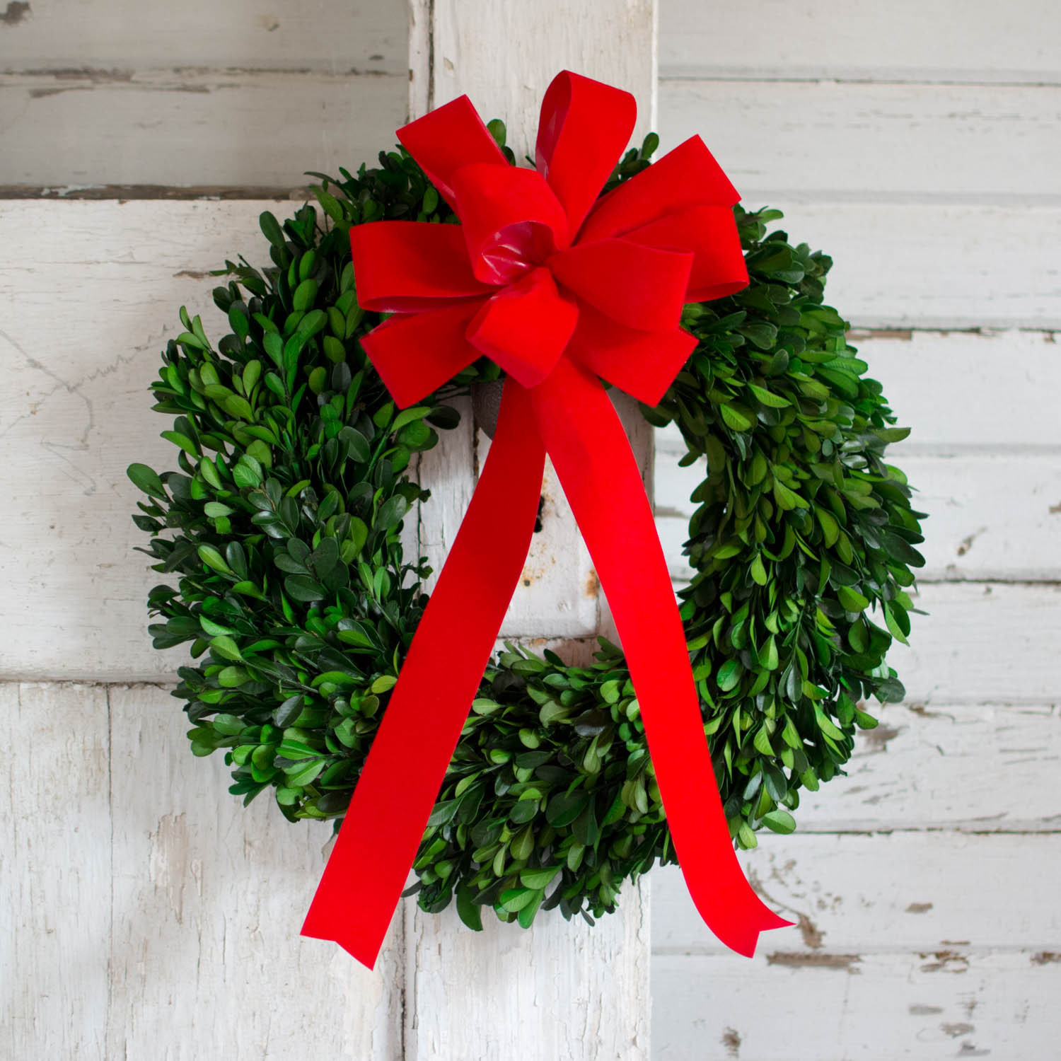 Interesting Artificial Boxwood Wreath with Simple Design for Exterior: Fascinating Artificial Boxwood Wreath With Red Ribbon